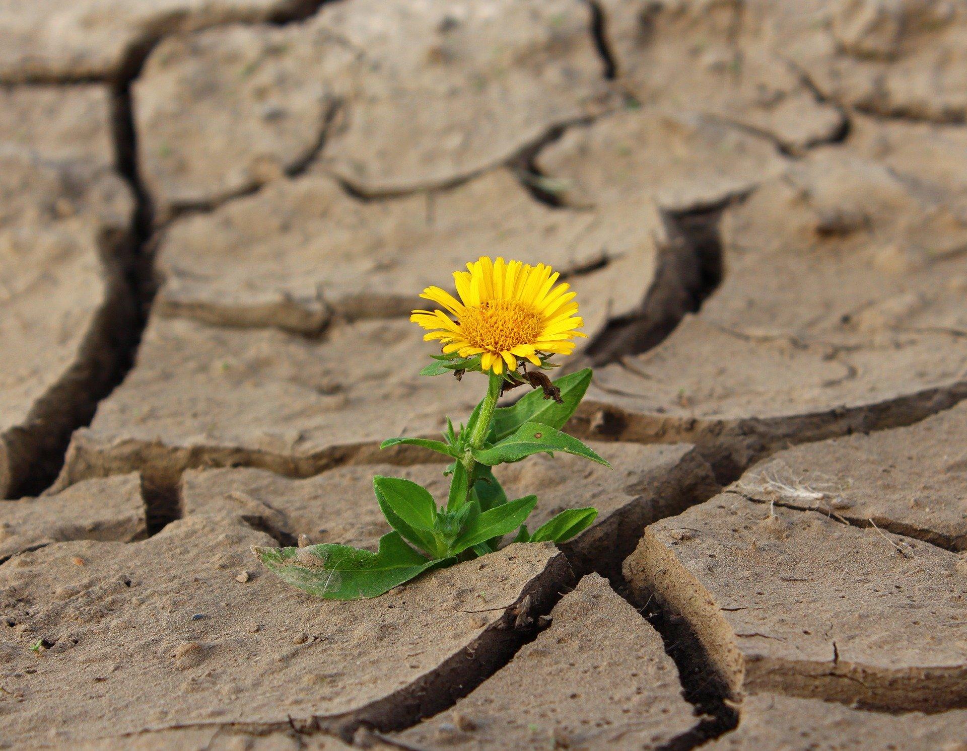 L'enjeu principal du déconfinement : la capacité d'adaptation continue